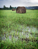 Summer landscape with rolls of hay on a wet mowed field Stock Image