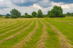 Summer landscape with rows of mown hay on a water-meadow Royalty Free Stock Images