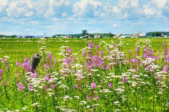 Summer landscape in rural Canada. Beautiful HDR rural landscape: wildflowers, invasive purple loosestrife and white valerian, alongside the road in Quebec Royalty Free Stock Photo