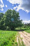 Summer landscape. Rural dirt road along the forest, Moscow suburbs, Russia. Royalty Free Stock Photo