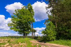 Summer landscape. Rural dirt road along the forest, Moscow suburbs, Russia. Royalty Free Stock Photos