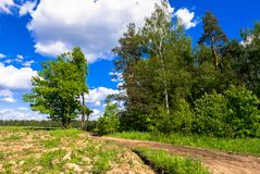 Summer landscape. Rural dirt road along the forest, Moscow suburbs, Russia. Stock Photography