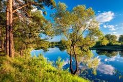 Summer landscape. Stock Photography