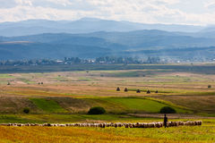 Summer landscape with sheperd. Summer landscape with shepherd and his sheep from Bukovina, Romania royalty free stock photo