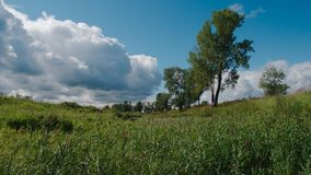 Summer landscape in Siberia, Russia royalty free stock photo