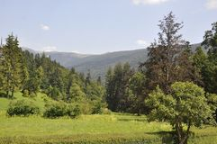 Summer Landscape from Sinaia in Romania Royalty Free Stock Photo