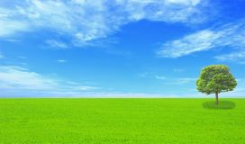 Summer landscape with sky, green grass and tree Royalty Free Stock Images