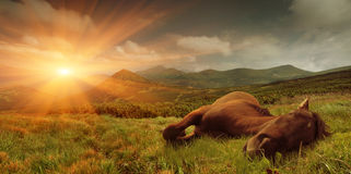 Summer landscape with a sleeping horse Stock Photo