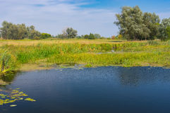 Summer landscape on a small river Merla in central Ukraine Royalty Free Stock Photos
