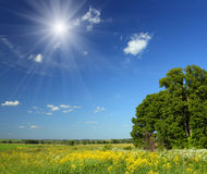 Summer landscape with small woods Royalty Free Stock Photo