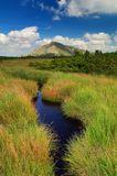 Snezka mountain and peat bog Stock Images