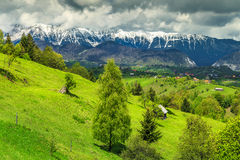 Summer landscape with snowy mountains near Brasov, Transylvania, Romania, Europe. Fantastic alpine landscape with stunning green fields and high snowy Piatra royalty free stock image