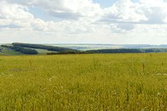 Summer landscape with a sowed green field. And ravines royalty free stock image