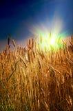 Summer landscape and splendid sunset. Royalty Free Stock Photo