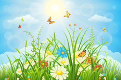 Summer landscape. Summer or spring meadow landscape with flowers, grass and butterflies Royalty Free Stock Images