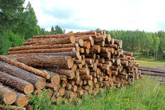 Summer Landscape with Stack of Pine Logs Royalty Free Stock Photo