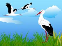 Summer landscape with storks. Vector summer landscape with storks Royalty Free Stock Image