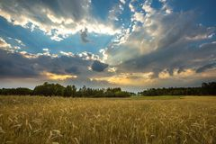 Summer landscape with stormy sky over fields Royalty Free Stock Photos