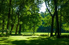 Summer landscape - colorful summer city park with green summer trees in sunny weather. Summer landscape - summer city park with deciduous green trees in sunny royalty free stock photography