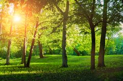 Summer landscape, summer park in sunny weather at sunset. Summer landscape, colorful summer park in sunny weather at sunset. Summer trees in the park lit by stock photography