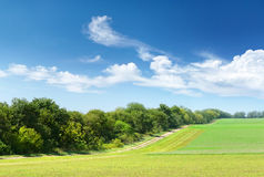 Summer landscape. In a sun day Stock Images