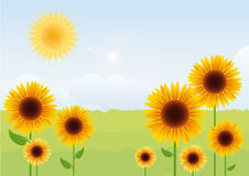 Summer landscape with sunflowers. Sunflower vector. Vector illustration of a sunny day Royalty Free Stock Image