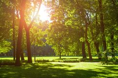 Summer landscape - sunny summer city park with green summer trees in sunny weather. Summer landscape with colorful summer city park and deciduous green trees in stock image