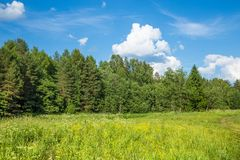 Summer landscape in sunny day. royalty free stock photos