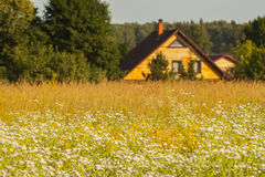 Summer landscape, sunny day, Meadow, country house Royalty Free Stock Images