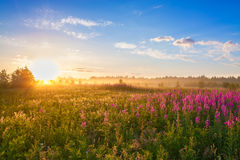 Summer  landscape with the sunrise, a blossoming meadow and fog Royalty Free Stock Photo