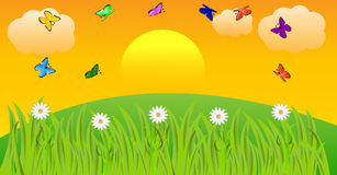 Summer landscape at sunset with butterflies and flowers. Vector illustration Stock Photos