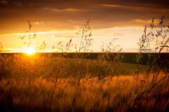Summer landscape: sunset over a background of a field with a mat. Ure grain harvest royalty free stock image