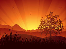 Summer landscape sunset and tree Stock Photos