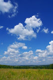 Summer landscape t. Summer landscape with blue sky, green grass and trees Stock Images