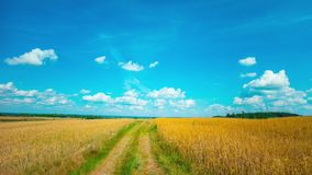 Summer Landscape,  time-lapse. Summer Landscape, blue sky  time-lapse stock video footage