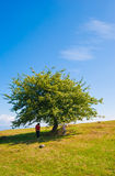 Summer landscape tree child and mother Royalty Free Stock Images