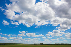 summer landscape with tree field Stock Image