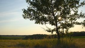 Summer landscape with tree. On meadow stock video footage