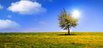 Summer landscape and tree. Royalty Free Stock Photos