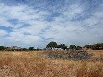 Summer landscape. Landscape with trees, dry grass and sky with clouds royalty free stock photos