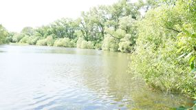 Summer landscape, trees on the shore of the pond royalty free stock photos