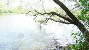 Summer landscape, trees on the shore of the pond royalty free stock photography