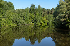 Summer landscape with trees reflecting in a lake Royalty Free Stock Photo