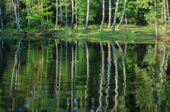 Summer landscape with trees reflection in lake Stock Photography