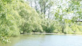 Summer landscape, trees on the shore of the pond stock image