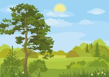 Summer landscape with trees and sky Royalty Free Stock Image