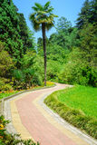 Summer landscape in tropical garden. Arboretum of Sochi. Stock Photos