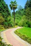 Summer landscape in tropical garden. Arboretum of Sochi. Summer landscape in tropical garden. Arboretum of Sochi, Russia Stock Photos
