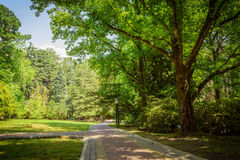 Summer landscape in tropical garden. Arboretum of Sochi. Royalty Free Stock Images