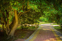 Summer landscape in tropical garden. Arboretum of Sochi. Stock Photography
